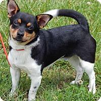 Adopt A Pet :: Cooper(9 lb) GREAT Lil' Dog! - SUSSEX, NJ