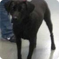 Adopt A Pet :: Cali - Columbus, IN