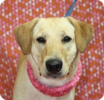 Labrador Retriever Mix Dog for adoption in Jackson, Michigan - Hanna