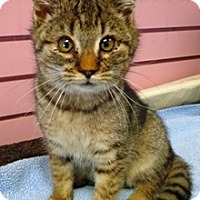 Adopt A Pet :: Grady - Lebanon, PA