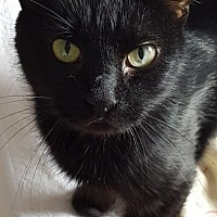 Adopt A Pet :: Surie - Fishkill, NY