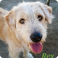 Adopt A Pet :: Rex - El Cajon, CA