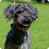 Adopt A Pet :: Marley - Port Jervis, NY