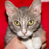 Adopt A Pet :: Arista - Fernandina Beach, FL