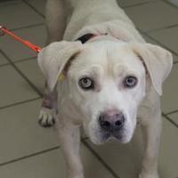 Adopt A Pet :: Woola - Starkville, MS