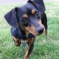 Adopt A Pet :: Zoe - Salem, OR