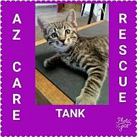 Adopt A Pet :: Tank - San Tan Valley, AZ
