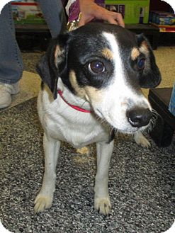 Terrier (Unknown Type, Small) Mix Dog for adoption in Humble, Texas - Charlie