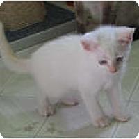 Adopt A Pet :: JoJo - Shelton, WA