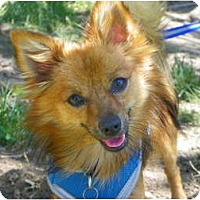 Adopt A Pet :: TAOS - Hesperus, CO