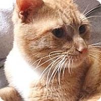 Adopt A Pet :: Gilbert - St. Petersburg, FL