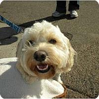 Adopt A Pet :: Tex - San Diego, CA