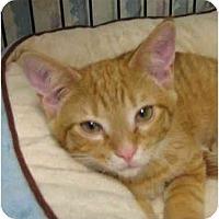 Adopt A Pet :: David - Jenkintown, PA