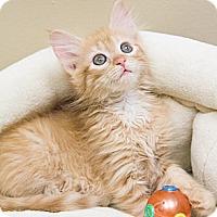 Adopt A Pet :: Wynne - Chicago, IL