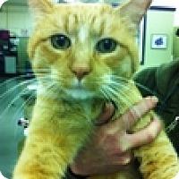Adopt A Pet :: Rusti - Vancouver, BC