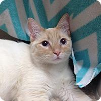 Adopt A Pet :: Flurry - Foothill Ranch, CA