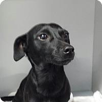 Adopt A Pet :: Echo - Garwood, NJ