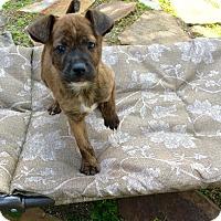 Adopt A Pet :: Kaya - Miami, FL