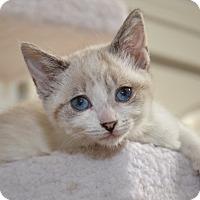 Adopt A Pet :: Lil Orphan Annie - Davis, CA