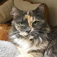 Adopt A Pet :: Autumn - Spokane Valley, WA