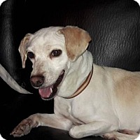 Adopt A Pet :: Gwendolyn - Victorville, CA