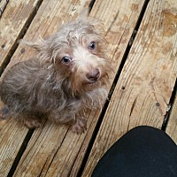 Adopt A Pet :: Tucker - springtown, TX