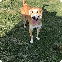 Adopt A Pet :: Zeus - South Dennis, MA