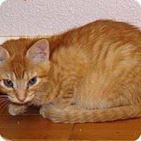 Adopt A Pet :: Nala - Coldspring, TX