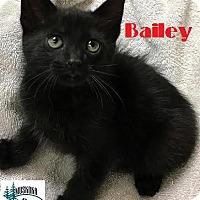 Adopt A Pet :: Bailey - Sweetheart! - Huntsville, ON