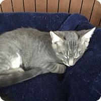Adopt A Pet :: McKeon 1 - Plainville, MA