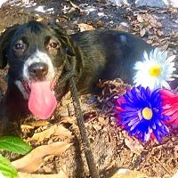 Adopt A Pet :: Valentino - West Palm Beach, FL