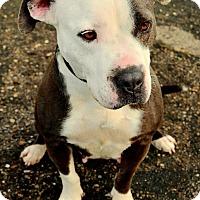 Adopt A Pet :: Ohana - Bakersfield, CA