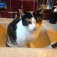 Adopt A Pet :: Chetara - Mt Pleasant, PA