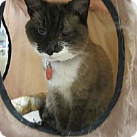 Adopt A Pet :: Ashby - Easley, SC