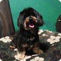 Adopt A Pet :: Barry - Goleta, CA