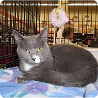 Adopt A Pet :: Graham - Warren, MI