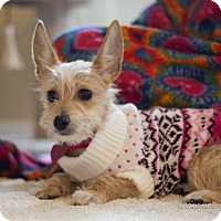 Adopt A Pet :: Annabelle - Vacaville, CA