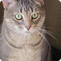 Adopt A Pet :: Ziva - Prescott, AZ