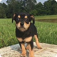 Adopt A Pet :: Ellen - Russellville, KY