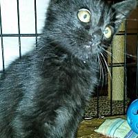 Adopt A Pet :: Luna - Bethpage, NY