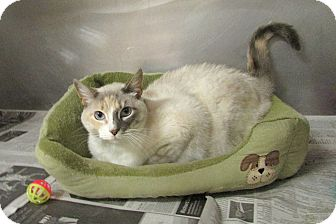 Domestic Shorthair Cat for adoption in Washingtonville, New York - Ruby