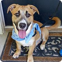 Adopt A Pet :: Vito - Baton Rouge, LA