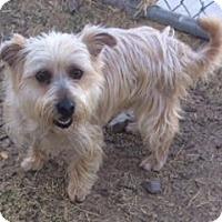 Adopt A Pet :: Leo-ADOPTION PENDING - Boulder, CO