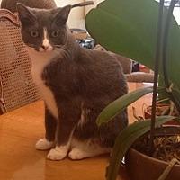 Adopt A Pet :: Frieda Luna - Fort Lauderdale, FL