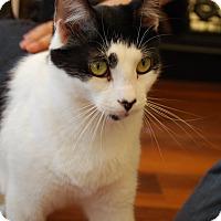 Adopt A Pet :: Jerry (TD) - Exton, PA