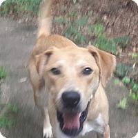 Adopt A Pet :: Lalia - Alpharetta, GA