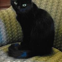 Adopt A Pet :: Smokey - Medway, MA