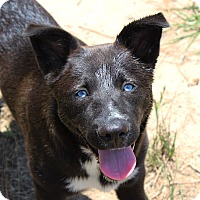 Adopt A Pet :: Bess - in Maine - kennebunkport, ME