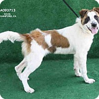 Adopt A Pet :: A093713 - Hanford, CA