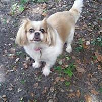 Adopt A Pet :: nunu - Hialeah, FL